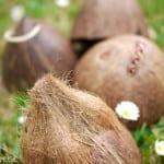 DIY Instruments : Coconut Shell Clip Clops