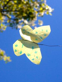 butterfly-fi
